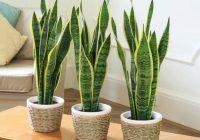 6 plantes vertes à avoir pour les intérieurs peu lumineux en hiver